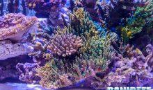 Tutti i coralli del PetsFestival versione 2017 – tutti da vedere