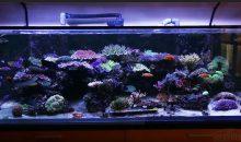 Lo spettacolare acquario da 1000 litri dedicato agli SPS di Joe Burger