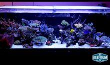 Uno spettacolare acquario marino da 1000 litri: Mike Shur