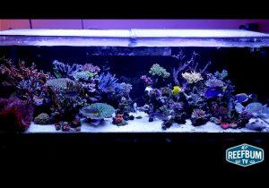Uno spettacolare acquario marino da 1000 litri mike shur for Acquario marino 300 litri prezzo