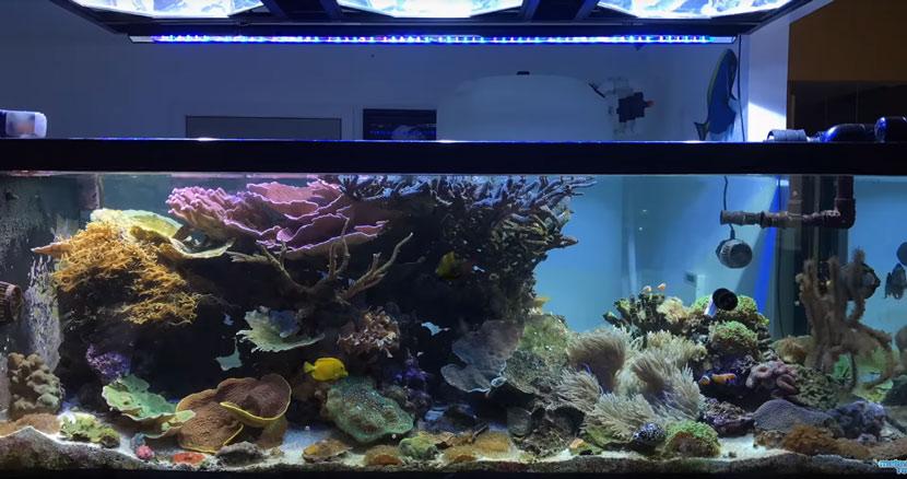 La ricostruzione dell'acquario di Marc Levenson - Melev's Reef - l'acquario come era prima