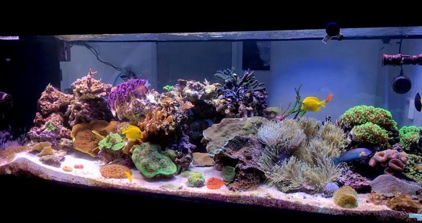 La ricostruzione dell'acquario di Marc Levenson - Melev's Reef - l'acquario dopo l'intervento