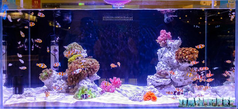 CIPS 2017: Marine Scaping - acquari marini in competizione