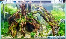 CIPS 2017: I'm sure you haven't seen Aquascapings like those