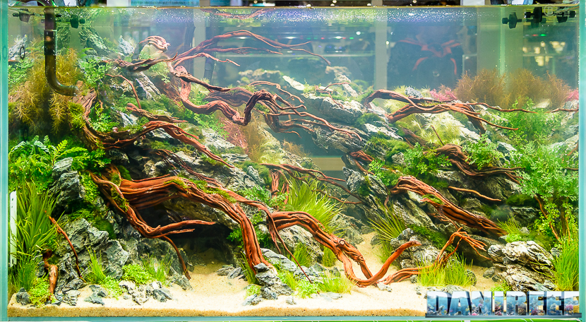 CIPS 2017: Aquascaping Contest Henry Amiri Lubis