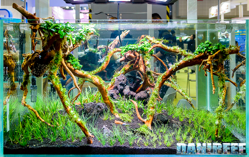 Cips 2017: Aquascaping contest Huynh Quoc Viet