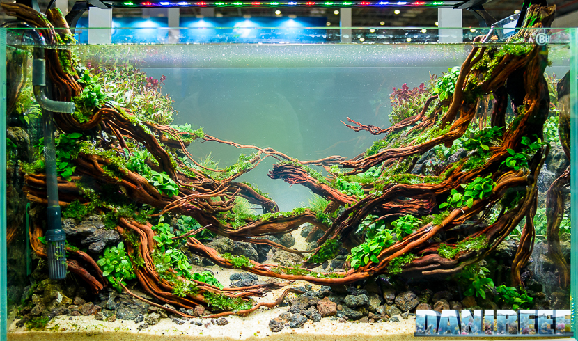 CIPS 2017: Aquascaping Contest Kevin Teoh