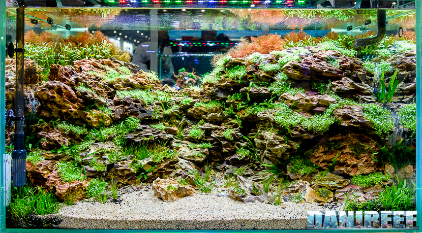 CIPS 2017: Aquascaping Contest Nobphacha Yimyou
