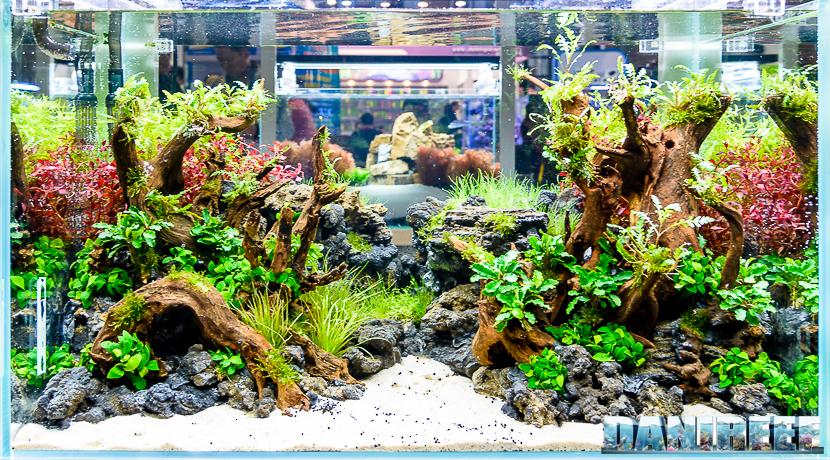 Cips 2017: Aquascaping contest Prapas Lamphuoc