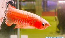 Interventi estetici sui pesci: lo sapevate? E siete pro o contro?