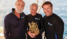 Un super corallo resistente allo sbiancamento scoperto da J. E. N. Veron
