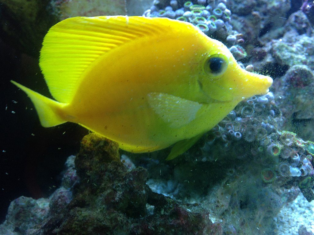 Iposalinità: come curare i pesci dai problemi spiegato da Lance Ichinotsubo