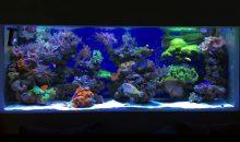 Uno spettacolare acquario di coralli molli da 900 litri tutto da vedere