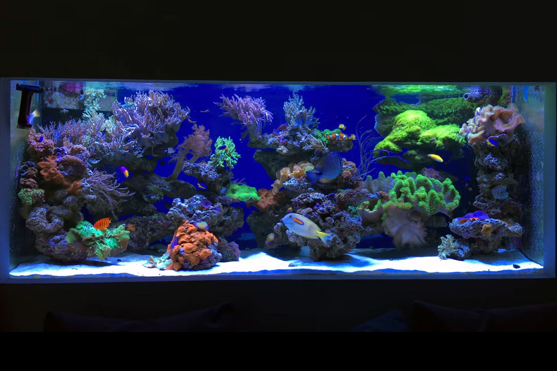 uno spettacolare acquario di coralli molli da 900 litri