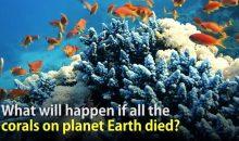 Cosa succederebbe se tutti i coralli della terra morissero?