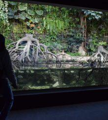 Uno spettacolare acquario di acqua salmastra nel nuovo spazio dello zoo di Zurigo