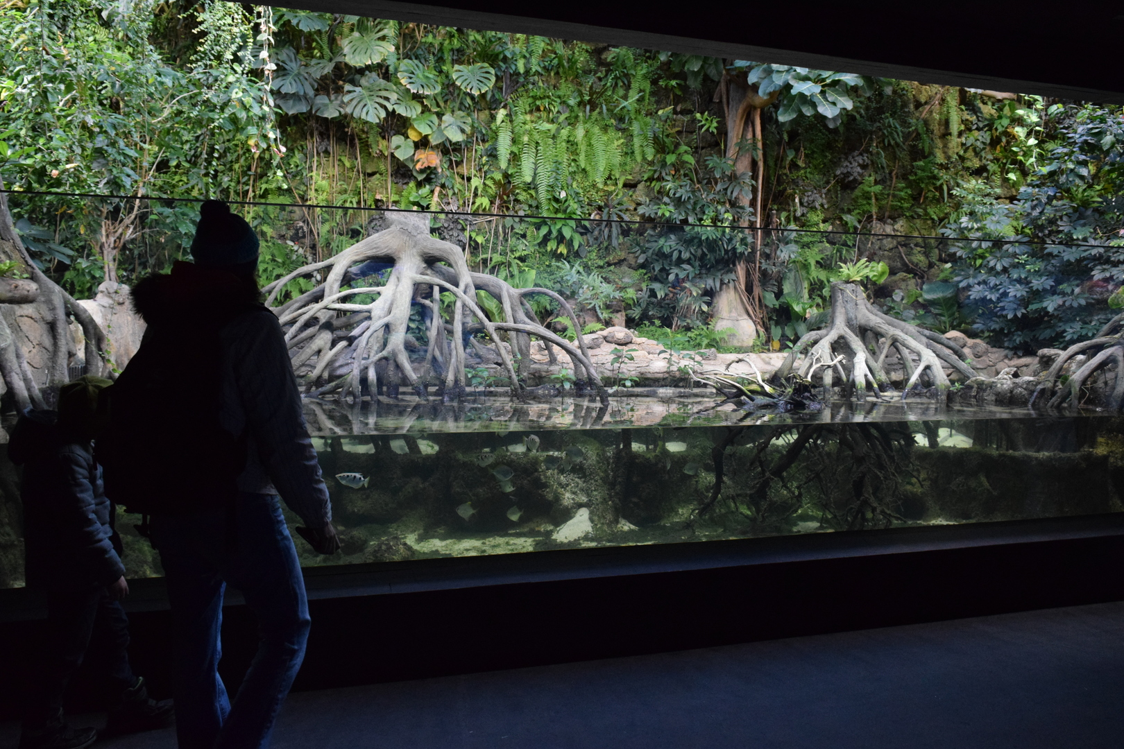 Aquarium of Brackish water at the Zurich Zoo