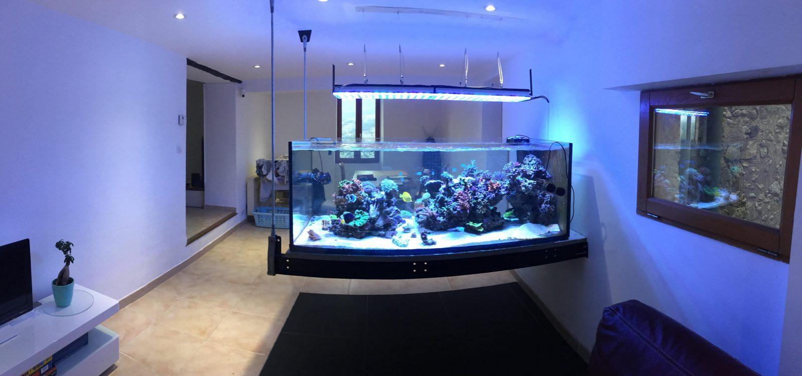 Un acquario sospeso da 800 litri fa sempre una bella figura – video