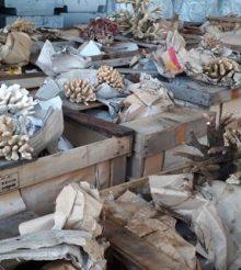 8 tonnellate di coralli sequestrate al porto di Genova – video