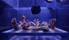 """Uno """"scudo solare"""" potrebbe prevenire lo sbiancamento dei coralli"""