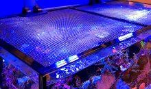 JumpGuard – una nuova rete per non far saltare i pesci dalla vasca