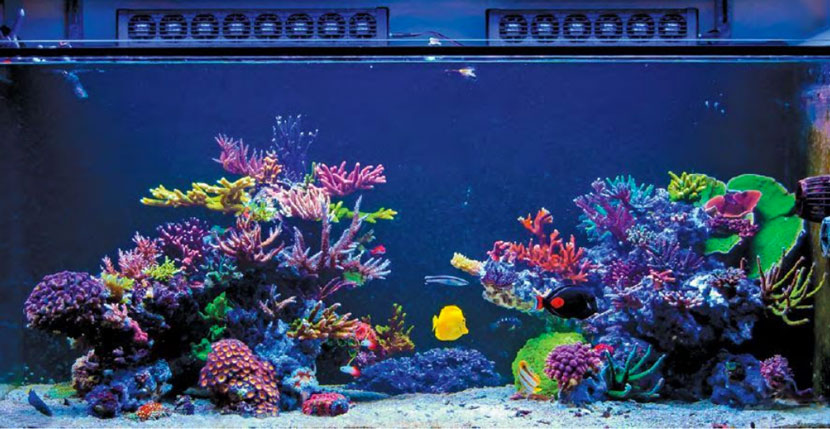 Reef Hobbyist Magazine del secondo trimestre 2018: Cunha Reef