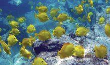 Il riscaldamento degli oceani minaccia gli stock ittici