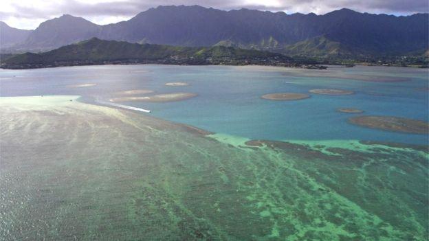 Barriera corallina al largo della costa di Oahu, Hawaii