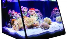 Full View – un acquario con il vetro frontale inclinato