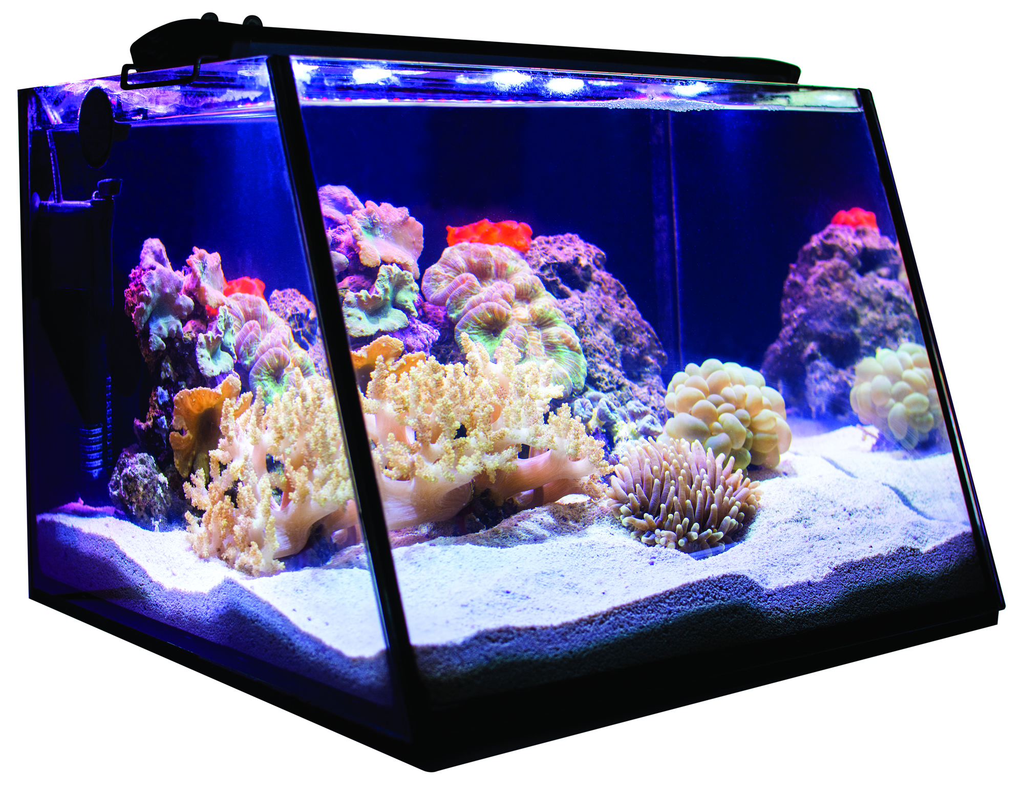Plafoniere Per Nanoreef : Nanoreef archives danireef portale dedicato all acquario