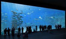 Nausicaá, l'acquario marino più grande d'europa, cambia volto e si rinnova