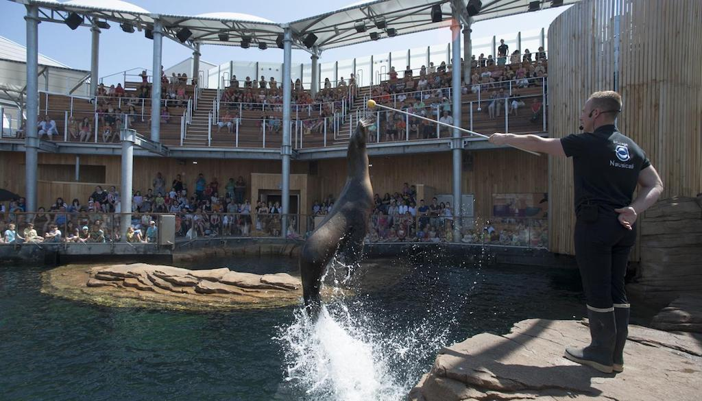 Nausicaá - Lo show dei leoni marini.