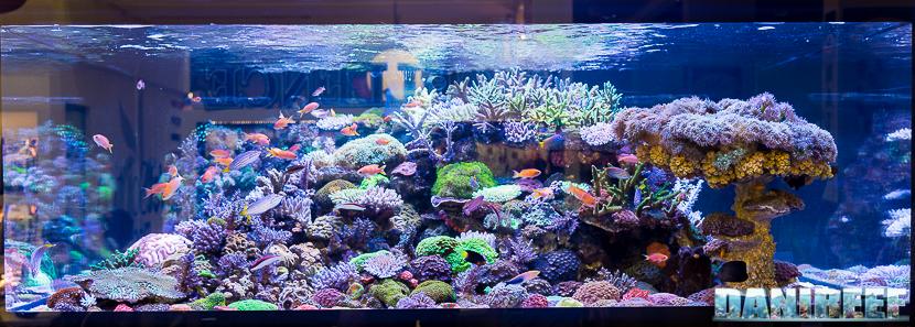 Interzoo 2018: il magnifico acquario marino presso lo stand DeJong MarineLife