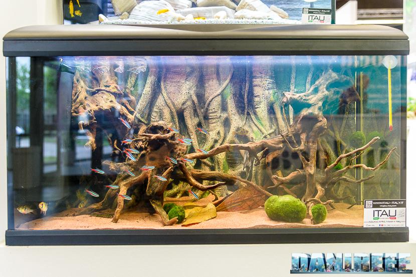 Interzoo 2018: acquario allestito presso lo stand Amtra