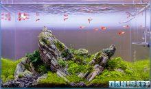 L'acquario Iwagumi – vediamo assieme tutte le sue caratteristiche