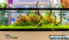 Interzoo 2018: the beautiful aquascaping of AquaFlora with 4K video
