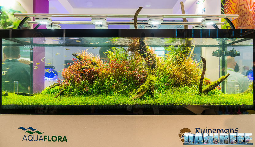 Interzoo 2018: the Aquascaping made by Filipe Oliveira at AquaFlora booth
