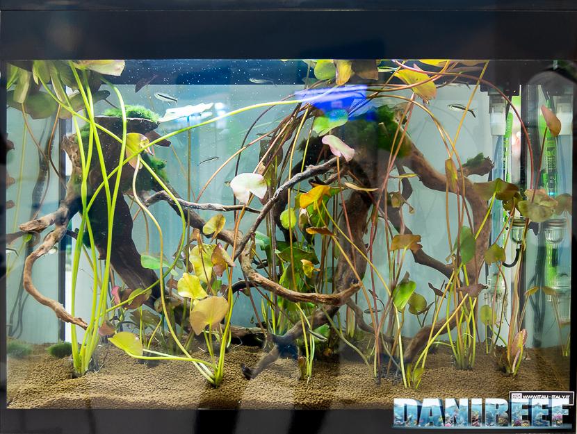 Interzoo 2018: l'acquario Emotion Nature Pro 60 presso lo stand Askoll