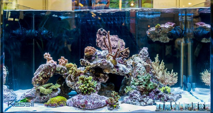 Interzoo 2018: acquario marino presso lo stand Kessil