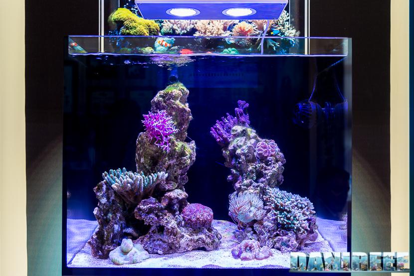 Interzoo 2018: Acquario marino con Aqamai LRM e Aqamai KPM