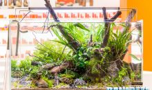 Interzoo 2018: the gorgeous aquascapings at the Equo booth and the new Probact