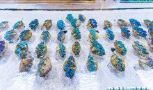 Da oggi De Jong MarineLife importerà Tridacne dal Mar Rosso
