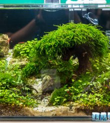 L'Aquario ideale per l'allevamento della Neocaridina davidi