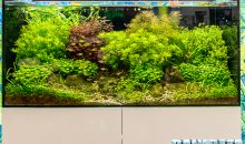 Dennerle shows great aquascaping sights during Interzoo 2018