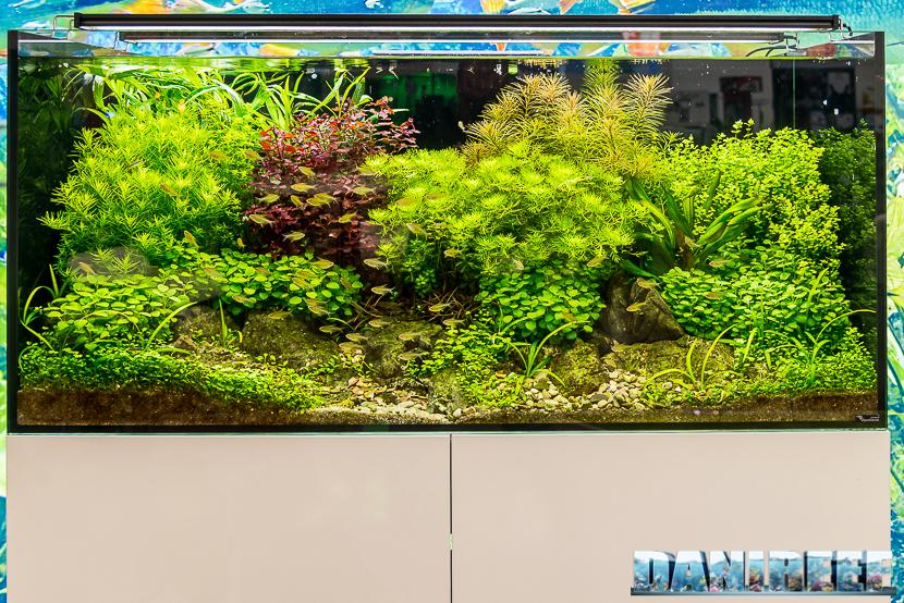 Uno spettacolare acquario piantumato con la tecnica dell'Aquascaping presso lo stand Dennerle all'Interzoo 2018