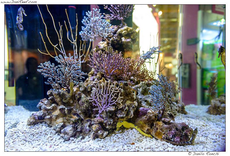 Gorgonie e Cavallucci marini