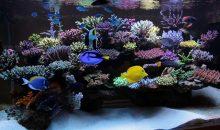 La splendido acquario di Mr. Benyamin Givi è la vasca del mese di luglio 2018 su ZEOvit.com