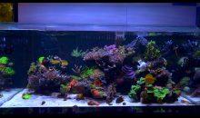 Casper's Reef – l'acquario per lo Zebrasoma flavescens bianco