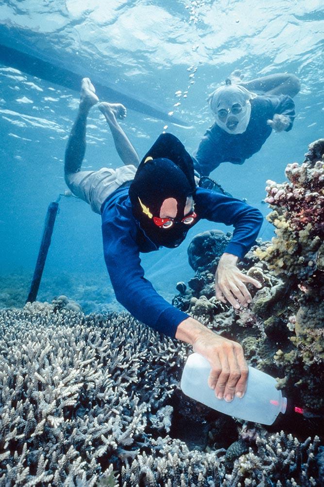Un pescatore delle Filippine durante una sessione di pesca col cianuro. Image Credit: Howard Hall / SeaPics.com