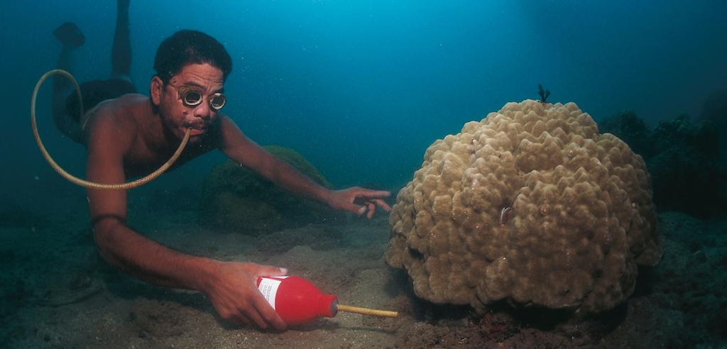 Il governo delle Filippine si sta impegnando per contrastare la pratica della pesca con il cianuro. La strada è aperta ma il cammino è ancora lungo. Image Credit: WILDLIFE GmbH/Alamy Stock Photo